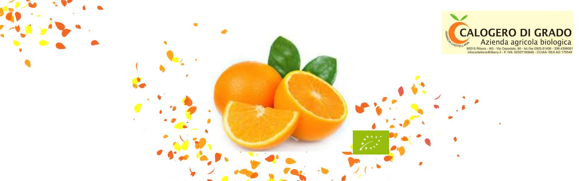 Bio Orangenkampagne
