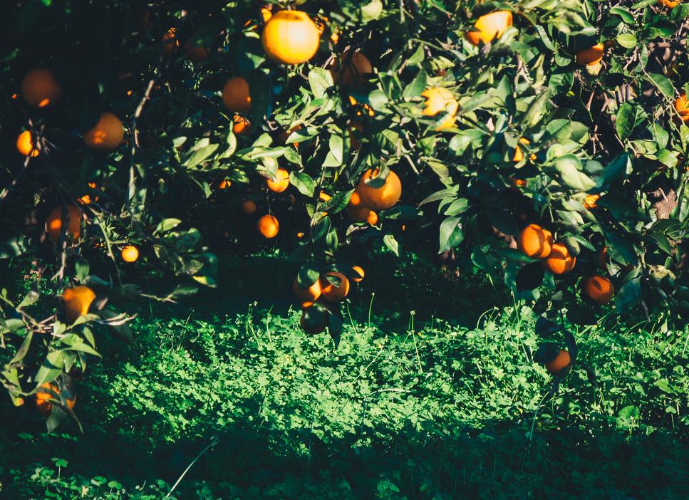 Bio-OrangenNKh6Ug7ixy9Ak