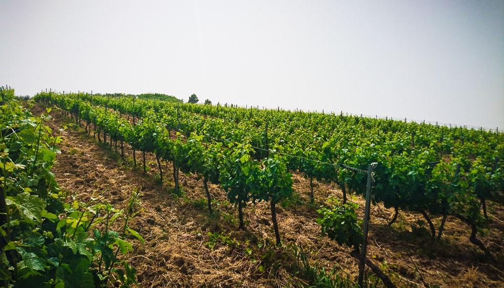 Bio-Wein-Militello-4F2Kr7YVaPu1mv