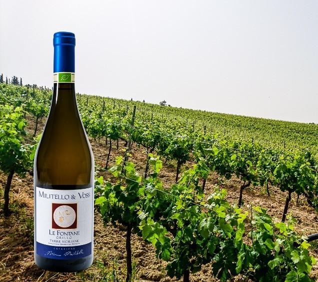 Bio-Wein-Militello-6