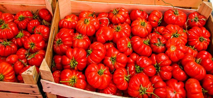 TomatenWf4Tk7fdk8Uki